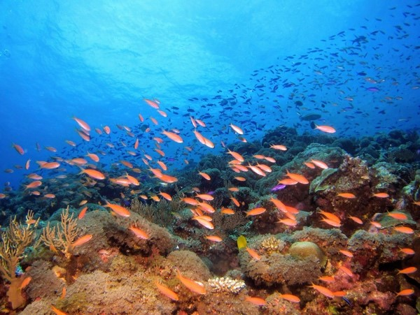 A picture containing nature, reef, colorful, ocean floor  Description automatically generated